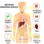 sistema-inmunológico