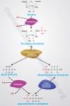 fructosemetabolism