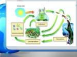 proceso-en-los-ecosistemas-2-728