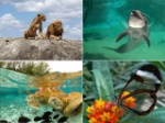 excelentes fotos del mundo animal