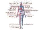 principal-veins-arteries