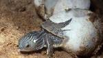 huevos reptil