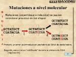 Mutaciones+a+nivel+molecular