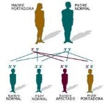 bases cromosomica 2