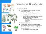 vascular vs nonvascular