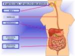 aparato-digestivo-2-primaria-2-638