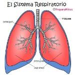 sist-respiratorio2-1