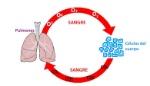 sangre CO2