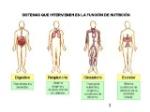 tema-3-aparatos-nutricin-2-638