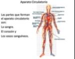principales-componentes-del-sistema-circulatorio