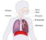 imagenes-del-sistema-respiratorio-para-ninos