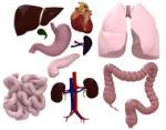 Órgãos