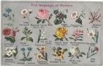 language-of-flowers-meaning