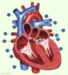 hart-oefenen