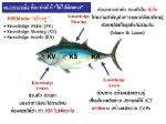 tuna_model 01