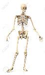 23042220-esqueleto-humano-masculino-muy-detallada-y-científicamente-correcto-en-la-postura-dinámica-de-frente-en-