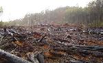 deforestazione_amazzonia_370468210