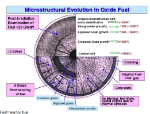 microstructure evolution -fast reactor fuel