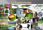Collage ecosistema