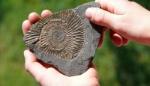 registro-fosil-creacion_799_460_80_c1