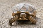 idade-de-uma-tartaruga