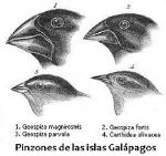 220px-Es-Darwin's_finches