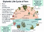 dibiontic life cycle