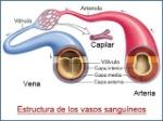 blog_estructura_vasos