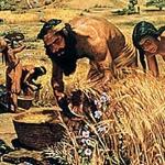 agricultura-recoleccion-trigo-2