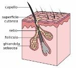 struttura_del_capello_com_e_fatto_il_capello