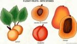 031-fleshy-fruit-with-stones-1