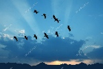 depositphotos_110565126-stock-photo-birds-flying-against-evening-sunset