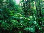 tropical-rainforest-New-Zealand-1024x768