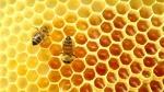 339875-כוורת-דבורים-תמונת-המחשה-נטוניוז-30kh9i8htbp0k6u17n9zpc