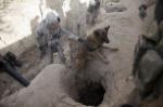 dogs_war_08