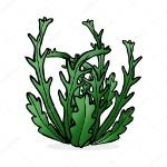 depositphotos_101749090-stock-illustration-cartoon-illustration-seaweed