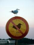 471_irony-bird