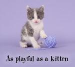 19029.ThinkstockPhotos-538766648_kitten