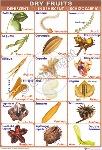 Classificatio of fruit types