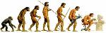 evolucion 3