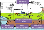The-nitrogen-cycle-1-uptake-of-nitrogen-by-plants-from-the-atmosphere-2-uptake-of