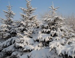 hvoynie-zimoy