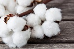 Le-coltivazioni-di-cotone-sono-a-rischio-a-causa-degli-sprechi-dacqua