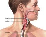 epiglooote