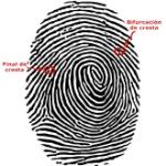 identificacion-por-huella-dactilar-cali