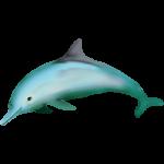 海豚 無背景