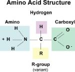 Pj2xAnIFTBuxwKWYL0Y6_aminoAcidStruc
