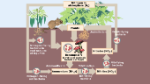 Nitrogen-Cycle-Feature-678x381