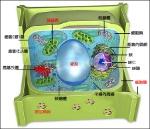 1307723094-53e9ee1be94ce9ae4240cc1286245350