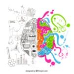 cerebro-analitico-creativo_23-2147506845